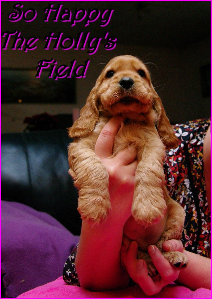 So happy The Holly's Field