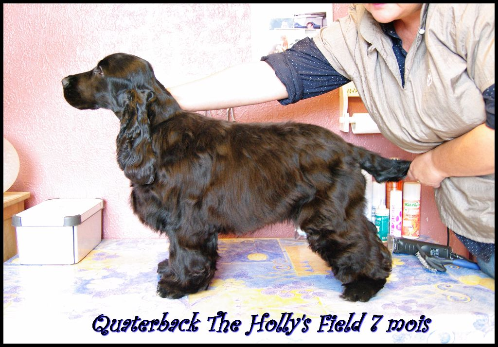 Quaterback The Holly's Field
