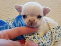 Chihuahua - Des Folies D'Emisa