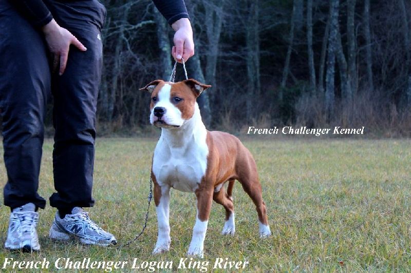 CH. French Challenger Logan king river