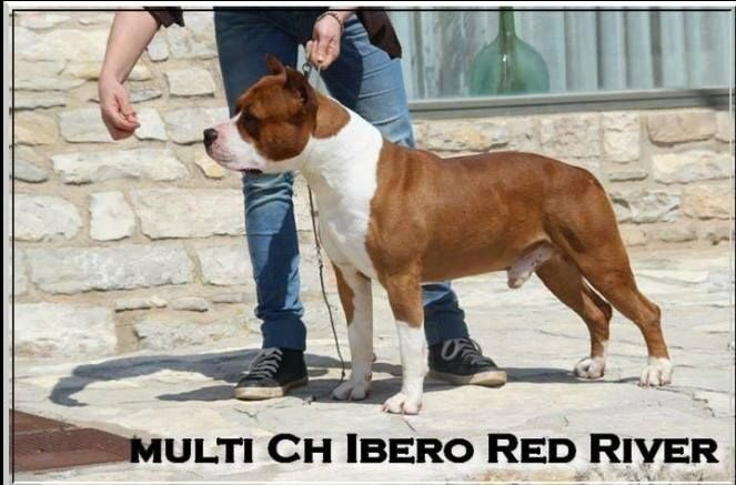CH. ibero Red river