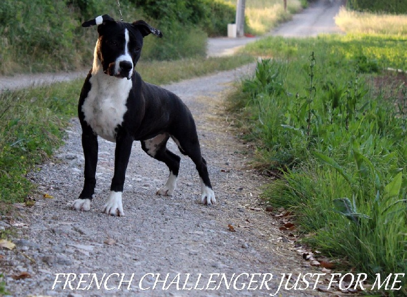 French Challenger Just for me