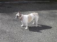 Clyde des pas de tacite vivant à Du Parc De Beaulieu