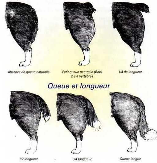 Accueil - Elevage Du Domaine De La Pierre Levèe - eleveur