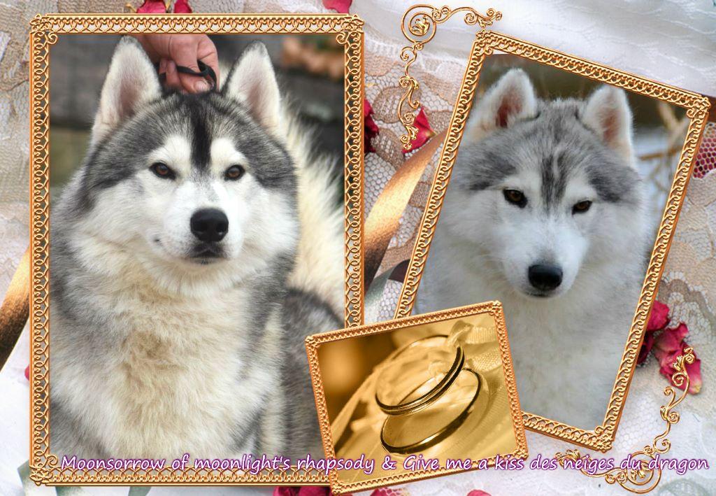 Of Moonlight's Rhapsody - Voici les 3 p'tits loups de Masha et Swan sont arrivés le 30 mars 2019