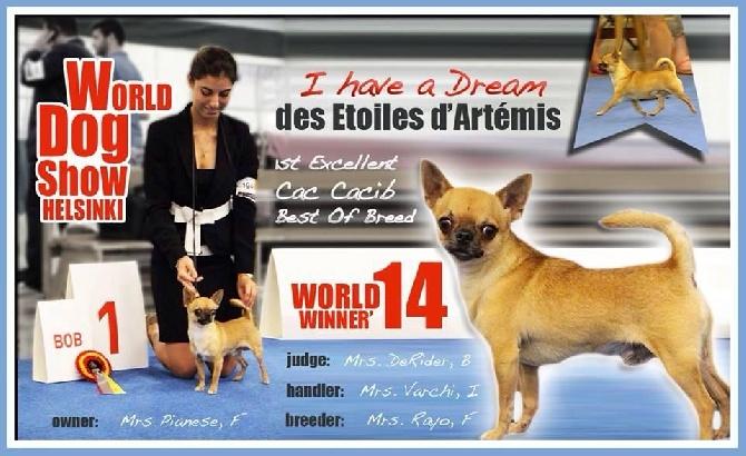 Apple Of Love - WORLD DOG SHOW'14