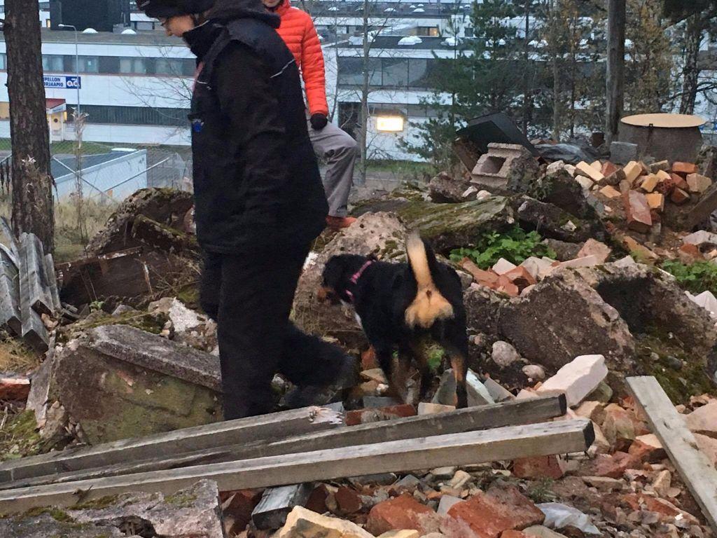 du Drakkar d'Odin - entrainement de chien sauveteur