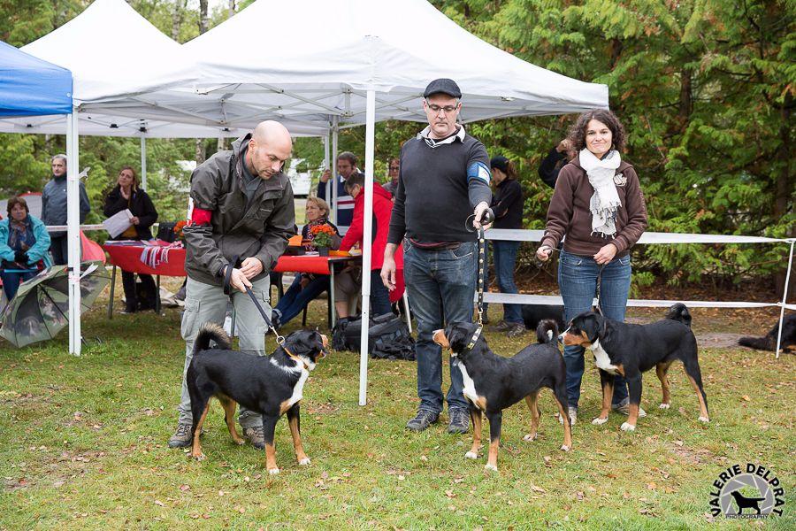 du Drakkar d'Odin - Nationale d'élevage Française AFBS 2017