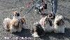 - Nationale d'élevage 2015 - Montluçon