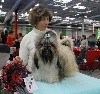 - Paris Dog Show 2018