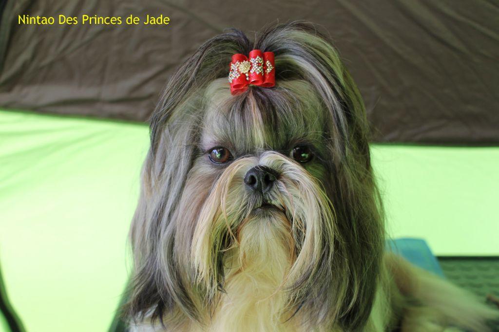 Nintao Des Princes De Jade