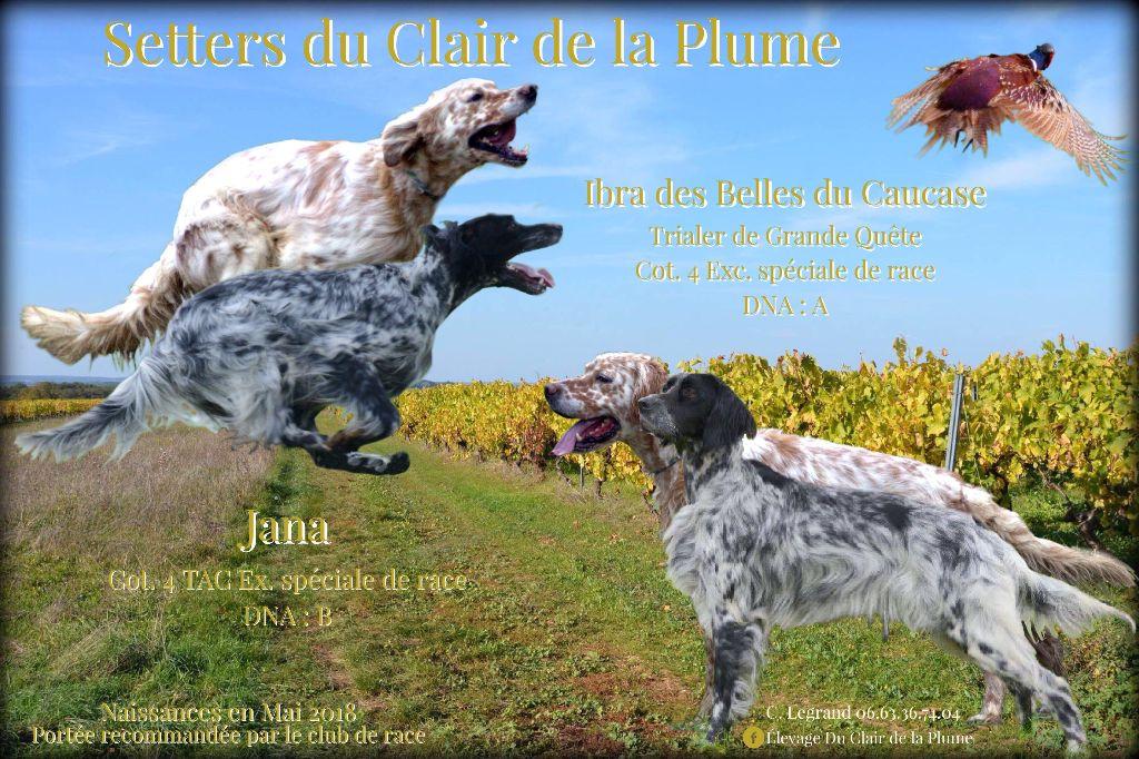 Elevage Du Clair De La Plume