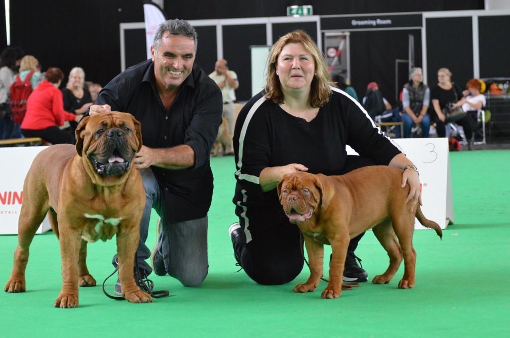Accueil - Elevage Dogue Force One - eleveur de chiens
