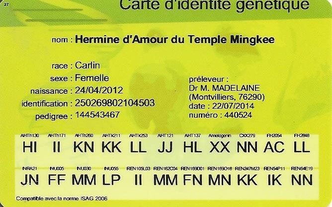 Hermine d'Amour du Temple Ming Kee