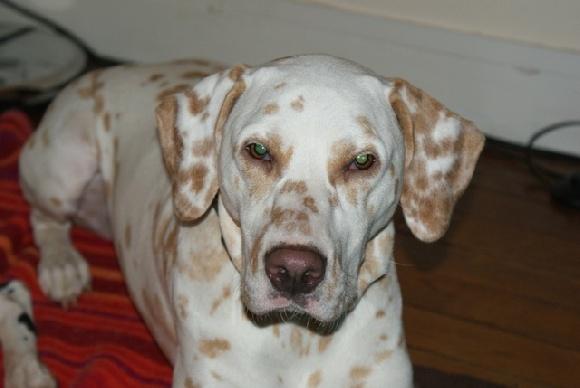 Accueil - Elevage De Pech & Catmalou - eleveur de chiens