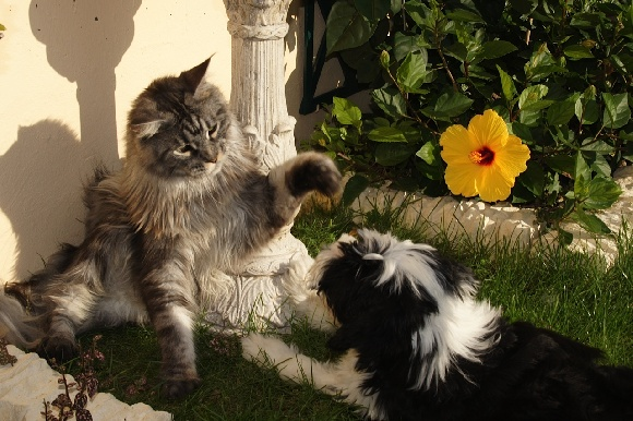 Accueil - Elevage Azur Wings Kennel - eleveur de chiens Terrier ...