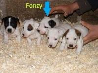 Fonzy (Sans Affixe)