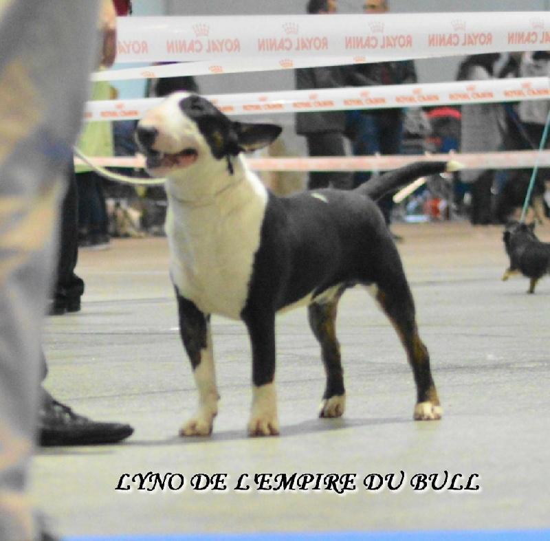 Publication : Des Bulls Du Hainaut  Auteur : Des Bulls du Hainaut