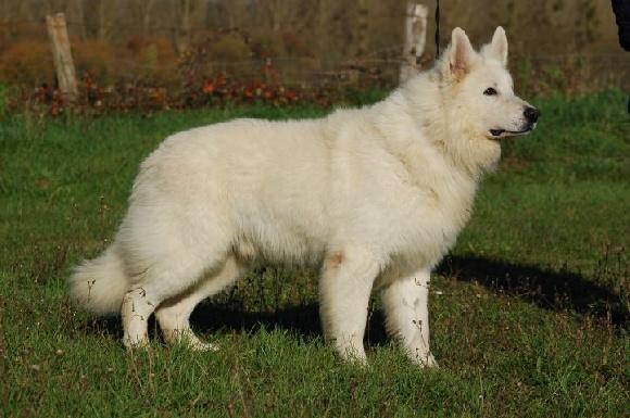 Accueil - Elevage Clos des duchesses - eleveur de chiens