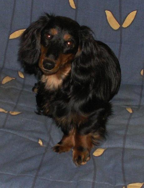 arsenic et vieilles dentelles du chene daniele chien de. Black Bedroom Furniture Sets. Home Design Ideas