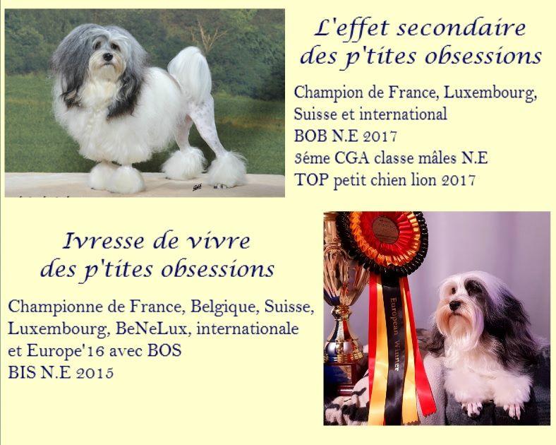 des P'Tites Obsessions - Petit chien lion - Portée née le 31/03/2018