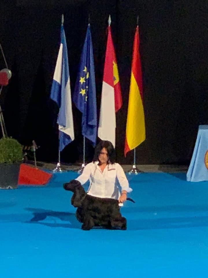 Mèden Âgan - BRADLEY REMPORTE LE GROUPE A L'exposition de Championnat TALAVERA 2019