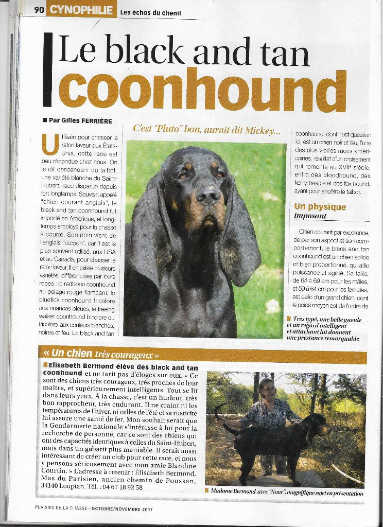 de la colline du bosc - Honneur au Black and Tan Coonhound