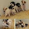 - Chiots Epice Intox
