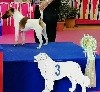- Exposition canine internationale Tarbes 17/11/19