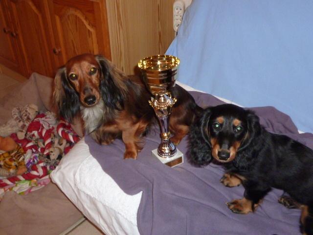 chien elevage des tr sors a petites patounes eleveur de chiens teckel poil long. Black Bedroom Furniture Sets. Home Design Ideas