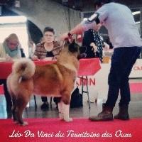 Léo da vinci du Territoire Des Ours
