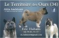 du Territoire Des Ours