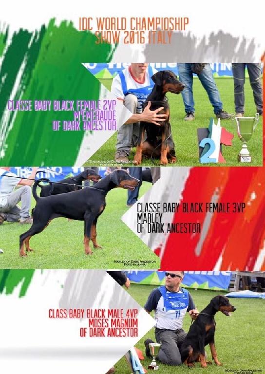 of Dark Ancestor - Résultats IDC World Championship 2016