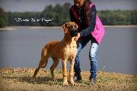Kamilla via del campo