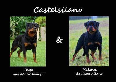 Rottweiler - De Castelsilano