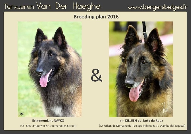 Van Der Haeghe - Naissance prévue mi-octobre 2016