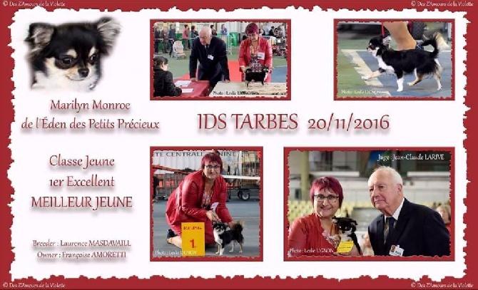 De L'Eden Des Petits Precieux - IDS TARBES 20/11/2016