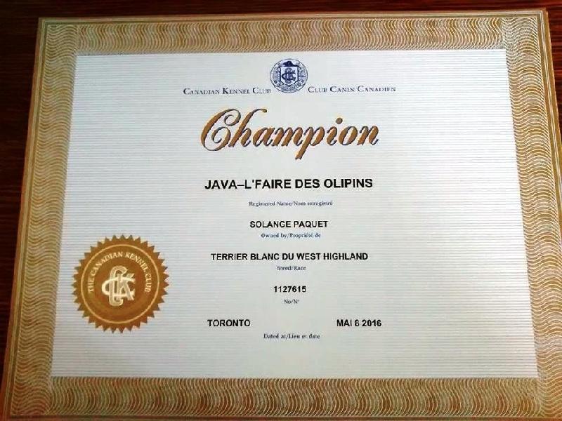 CH. Java- l'faire des Olipins