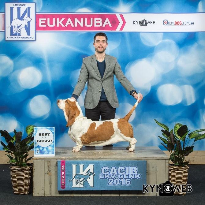 Dukes Of Limburg - Exposition Genk Mars 2016