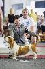 - European Dog Show Brussels