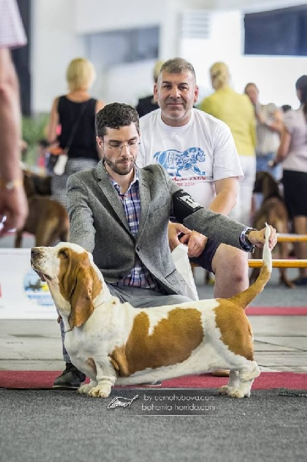 Dukes Of Limburg - European Dog Show Brussels