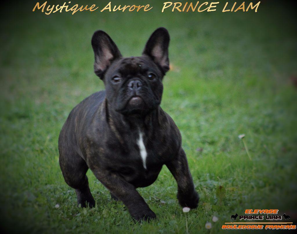 Mystique aurore Prince Liam