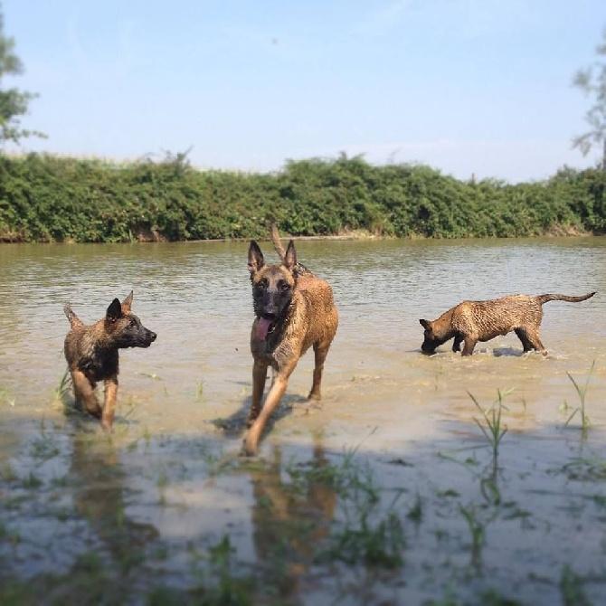 Accueil - Elevage Des Sept Soleils - eleveur de chiens