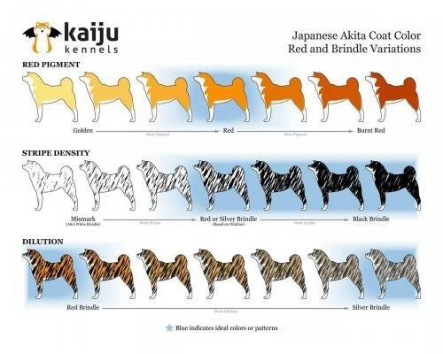 Génétique des robes et couleurs chez le chien - Page 3 Eee10a3e-486f-1064-499b-4738ae6dd9d4