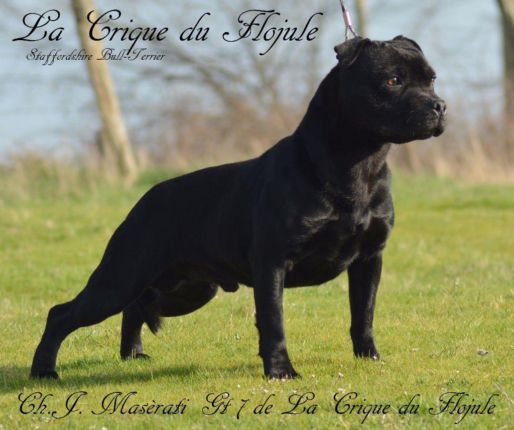 Publication : De la crique du Flojule  Auteur : grange cedric