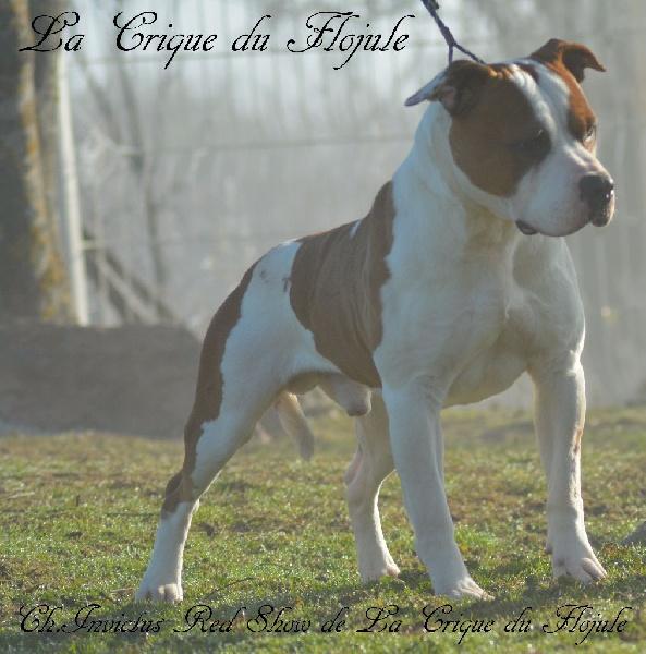 Publication : De la crique du Flojule  Auteur : cedric grange