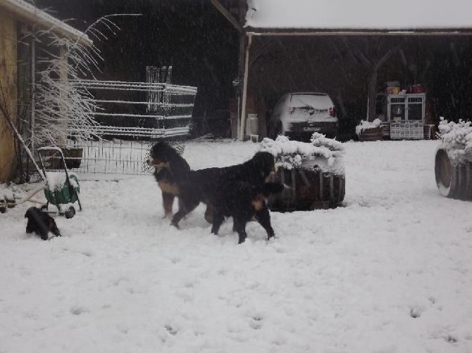 Notre élevage