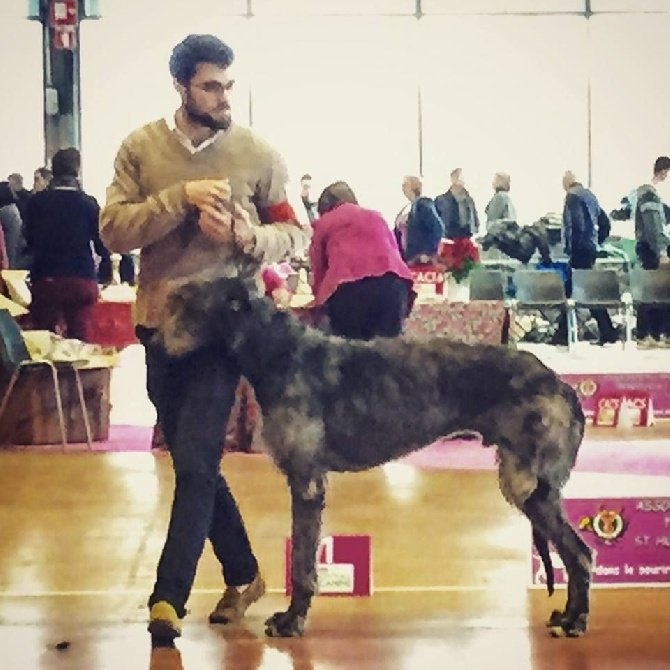 Antonius Vertragus - Embassador won BEST OF BREED at the French Specialty