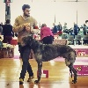 - Embassador won BEST OF BREED at the French Specialty