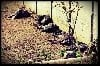 - Bain de soleil pour la meute, le printemps arrive !